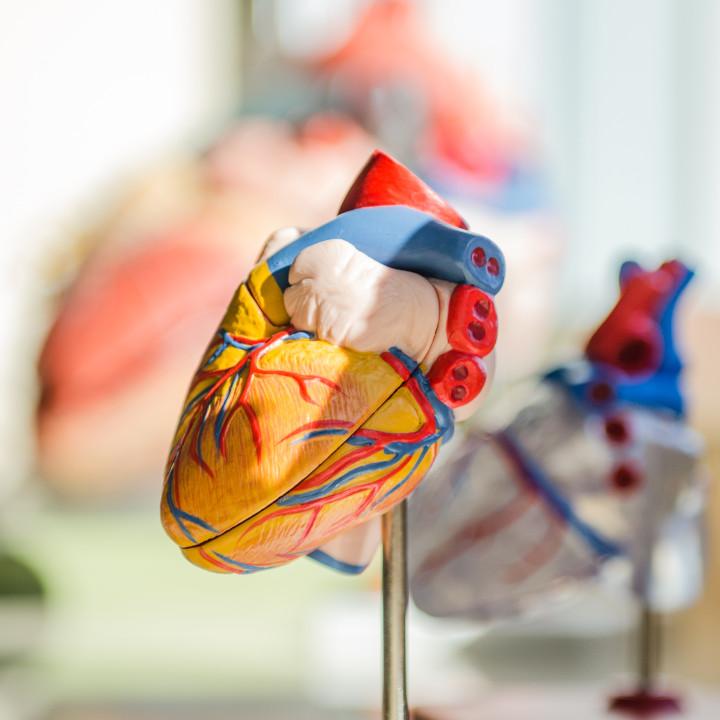 まずは心臓血管外科の概要を知る